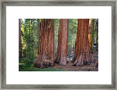 Three Graces Yosemite Framed Print