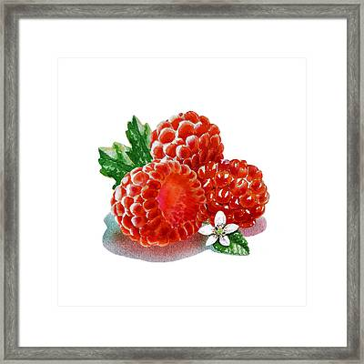 Three Happy Raspberries Framed Print by Irina Sztukowski