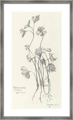 Three Herbs - Parsley Framed Print