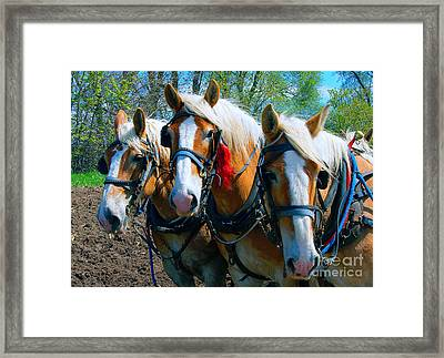 Three Horses Break Time  Framed Print
