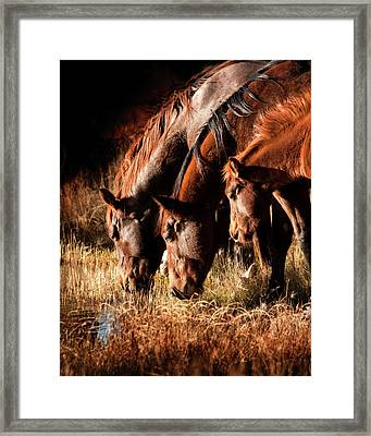 Three Horses Drinking In Dusky Light Framed Print by Sheila Haddad