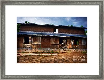 Three Horses In A Barn Framed Print by Dan Friend