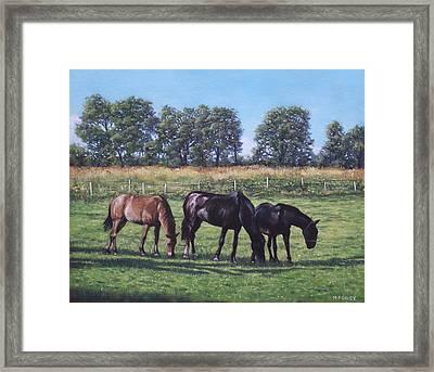 Three Horses In Field Framed Print