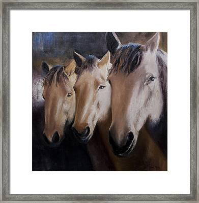 Three Horses Framed Print by Terri  Meyer