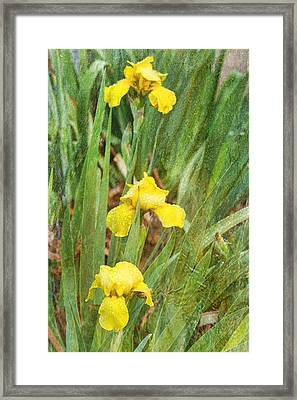 Three In A Row Framed Print by Joan Bertucci