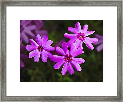 Three In The Pink Framed Print by ABeautifulSky Photography