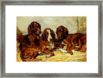 Three Irish Red Setters Framed Print
