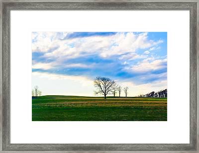Three Is A Crowd Framed Print by Megan Stahl