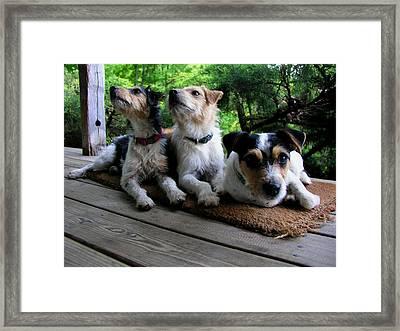 Three Jacks On A Mat Framed Print