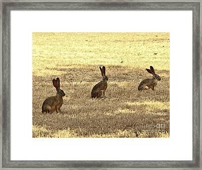 Three Jacks Framed Print