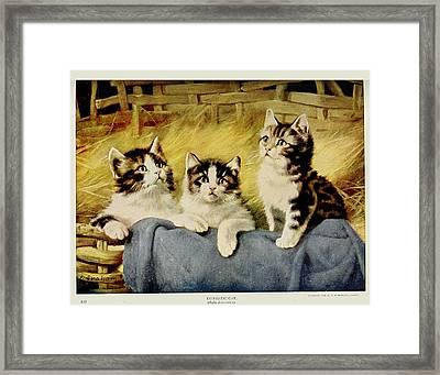 Three Kittens Framed Print by E Graham
