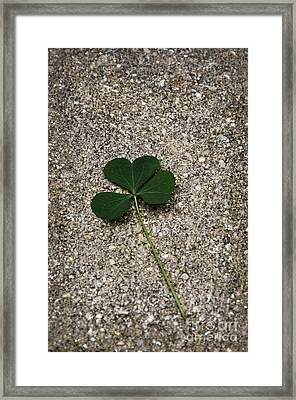 Three Leaf Clover Framed Print by Birgit Tyrrell