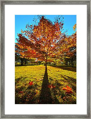 Three Leaves Down Framed Print by Phil Koch