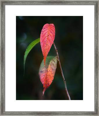 Three Leaves Of Fall Framed Print