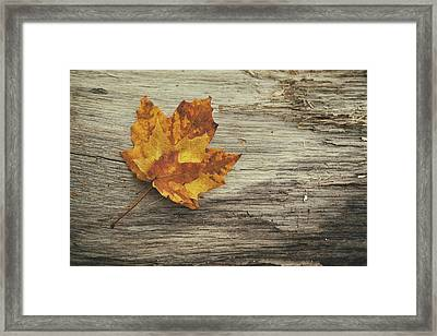 Three Leaves Framed Print by Scott Norris