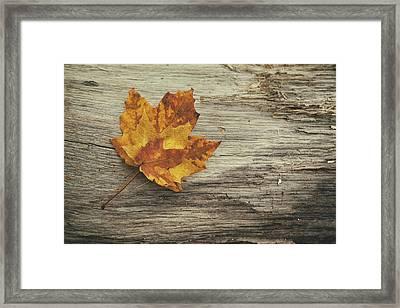 Three Leaves Framed Print