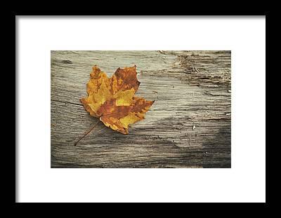 Maple Leaf Art Framed Prints