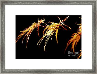 Three Leaves Framed Print by Terri Thompson