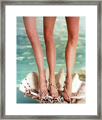 Three Legs Standing In A Shell Framed Print