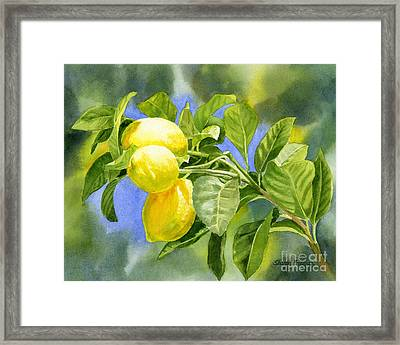 Three Lemons Framed Print by Sharon Freeman