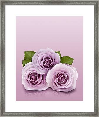 Three Lilac Roses Framed Print