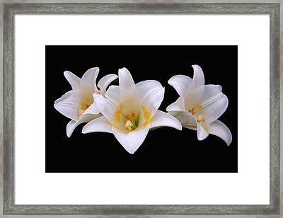 Framed Print featuring the photograph Three Lilies by Andy Lawless
