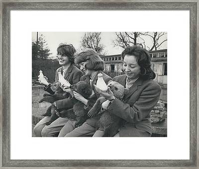 Three Little Bears Called Cilla, George And Ringo Framed Print by Retro Images Archive