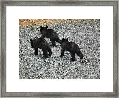Framed Print featuring the photograph Three Little Bears In Step by Jan Dappen