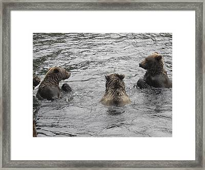 Three Little Bears Framed Print by Zane Giles