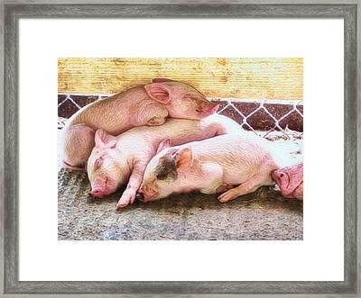 Three Little Piglets - Horizontal Framed Print