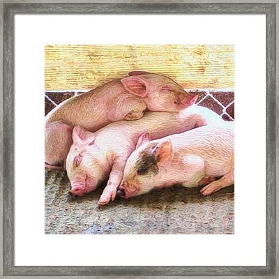 Three Little Piglets - Square Framed Print
