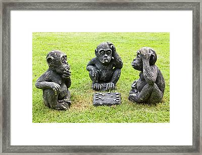 Three Monkeys Playing Checkers Framed Print