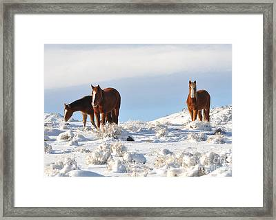 Three Mustangs In Snow Framed Print by Vinnie Oakes