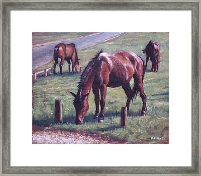 Three New Forest Horses On Grass Framed Print by Martin Davey