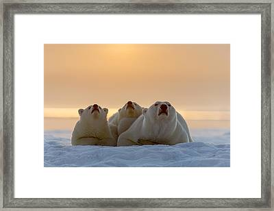 Three Noses Framed Print by Tim Grams