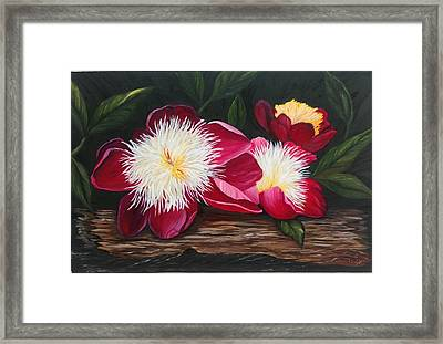 Three Of A Kind Framed Print