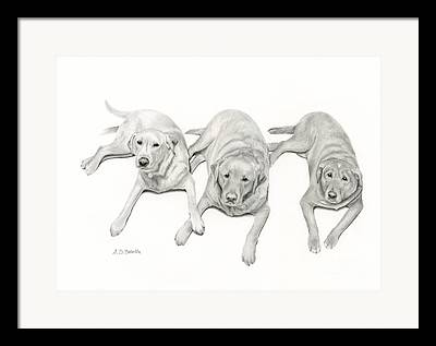 Pencil Drawings Of Pets Framed Prints