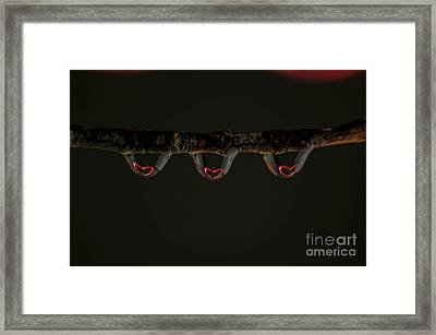 Three Of Hearts Framed Print by Patrick Shupert