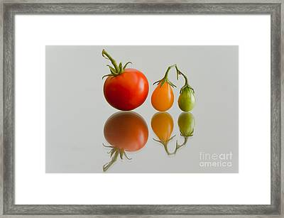 Three Of The Kinds Framed Print by Jonathan Nguyen