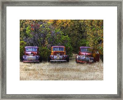 Three Old Friends Framed Print by Kandy Hurley