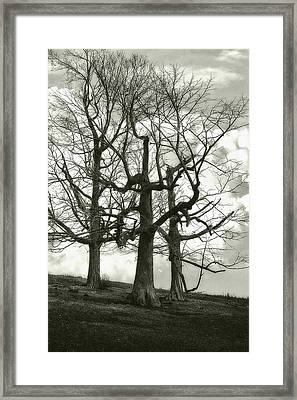 Three On A Hill Framed Print