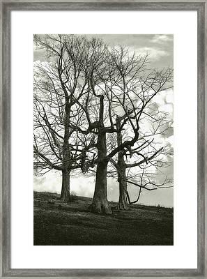 Three On A Hill Framed Print by Jack Zulli