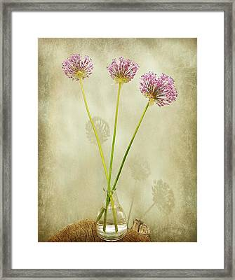 Three Onion Globes Framed Print by Chris Berry