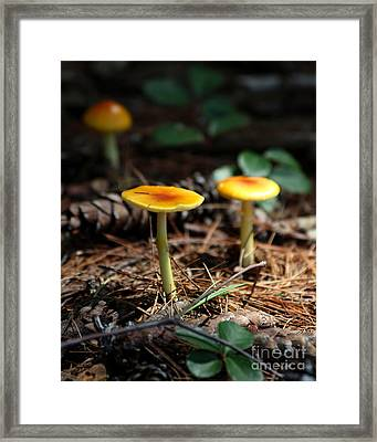 Three Orange Mushrooms Framed Print by Kenny Glotfelty