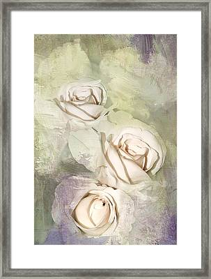 Three Pale Roses Framed Print by Diane Schuster