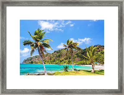 Three Palm Trees In Panama Framed Print by Jess Kraft