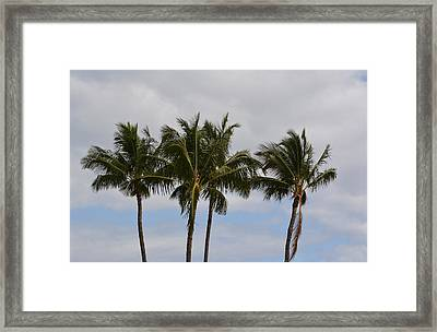 Three Palm Trees Framed Print by P S