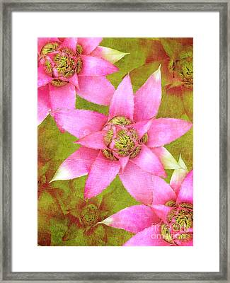 Three Pink Ladies Framed Print