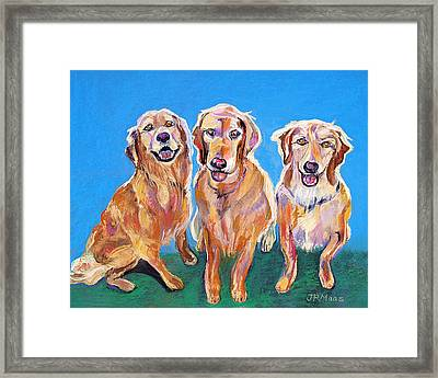 Three Playful Goldens Framed Print by Julie Maas