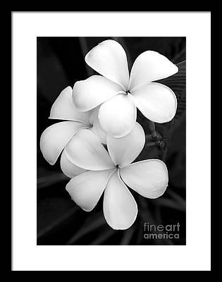 White Orchid Framed Prints
